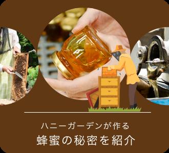 蜂蜜の秘密を紹介